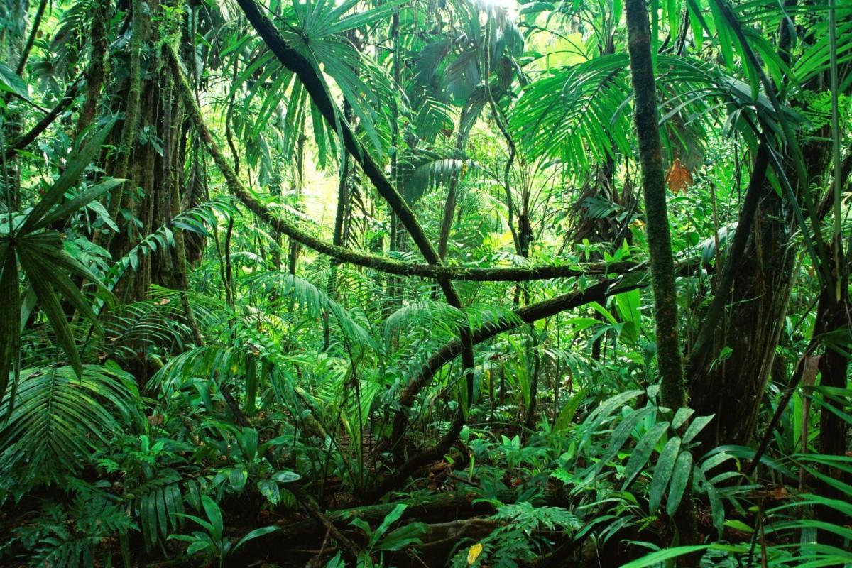 '정글'과 문학적 저널리즘, 그리고 사실과 주장의 경계.