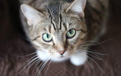 저널리즘의 미래? 고양이와 경쟁해서는 답이 없다.